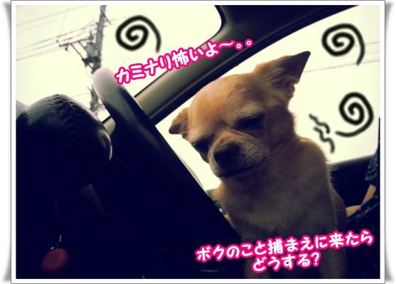 2013-8-6-1kaminarikowaiyo.jpg