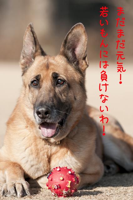 20110122_0172-1.jpg