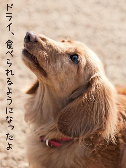 20110122_0175_1.jpg