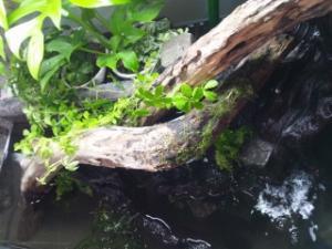 水の音を楽しむ