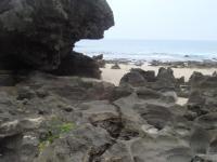 サンゴの浸食3