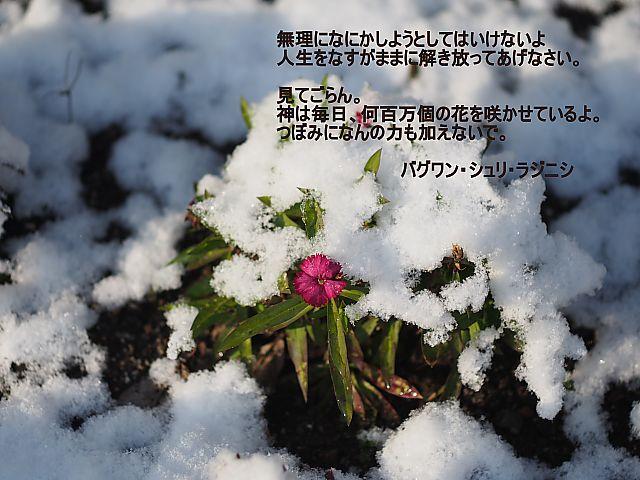 t_2211038.jpg