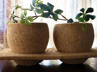 かわいいグリーンの鉢カバー