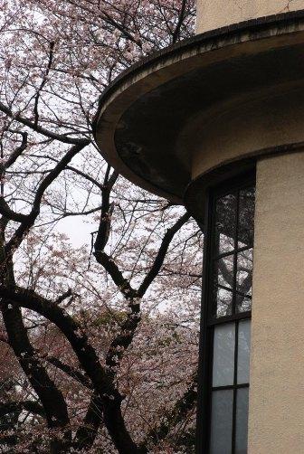 201003桜の窓②
