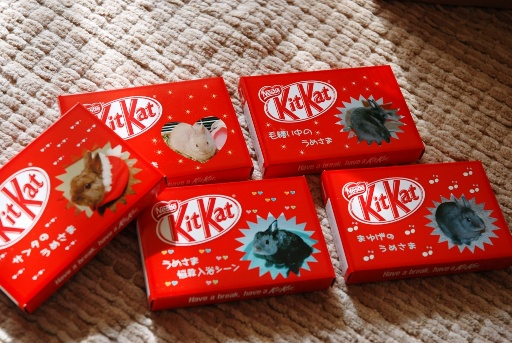 Kit Kat④