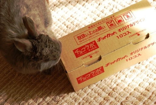 Kit Kat①