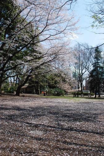 201004芦花公園