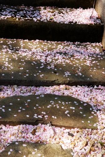 201004石段の散り桜