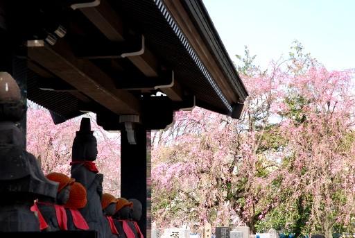 201004六地蔵と桜