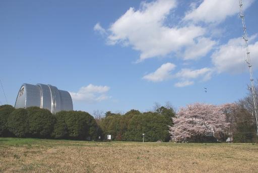 201004自動光電子午環と桜