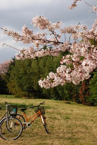 201004桜と自転車