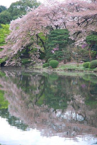 201004桜の水鏡