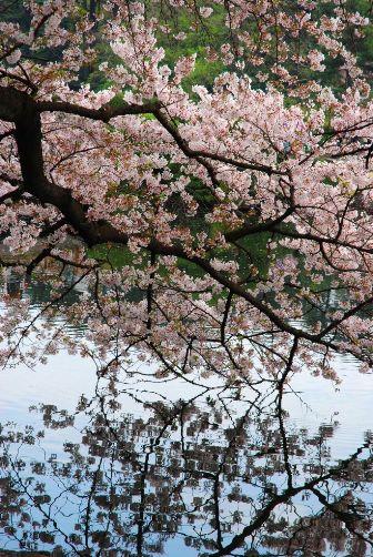 201004桜の水鏡②