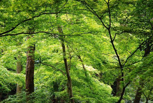 201004目黒・新緑