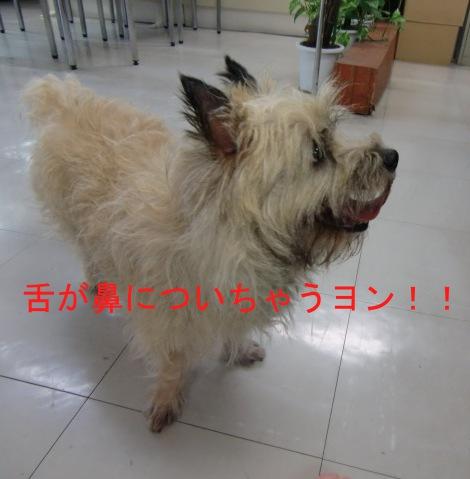 犬写真17
