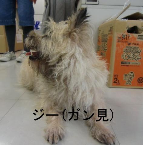 犬写真16