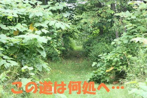 IMG_4247_convert_20110806160037.jpg