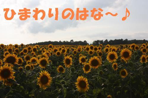 IMG_4356_convert_20110812221011.jpg