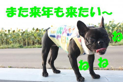 IMG_4388_convert_20110812221234.jpg