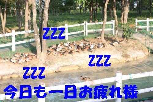 IMG_4427_convert_20110812221849.jpg