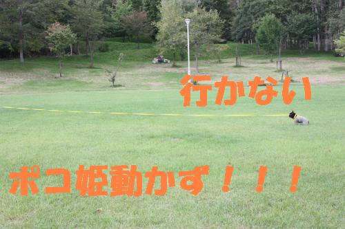 IMG_4809_convert_20111002212135.jpg