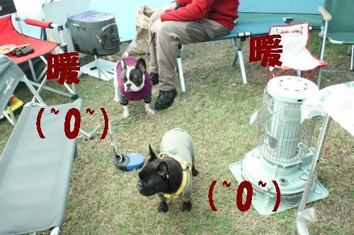 IMG_4851_convert_20111003190014.jpg