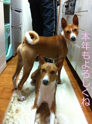 箱根駅伝2012011