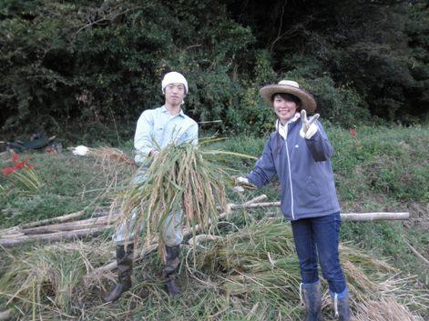 2010稲刈り10