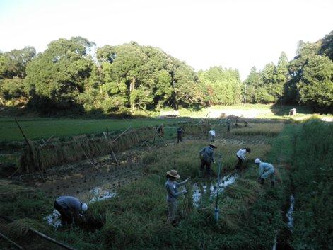 2010稲刈り11