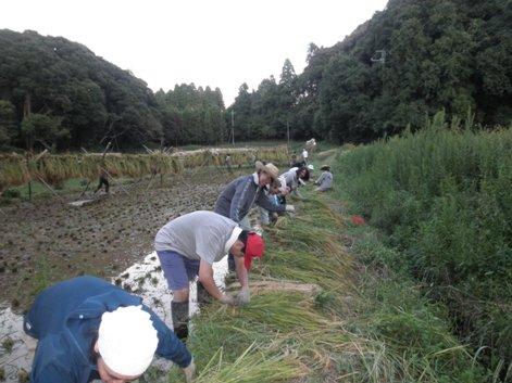 2010稲刈り12
