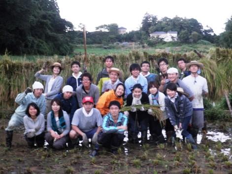 2010稲刈り13