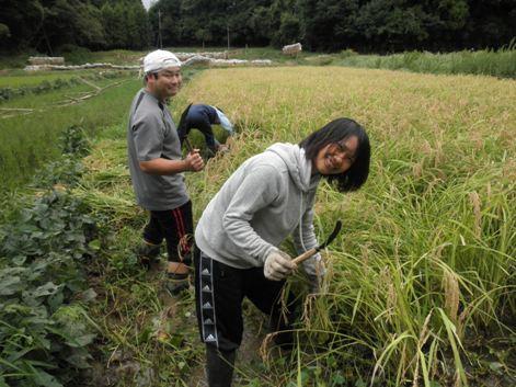 2010稲刈り4
