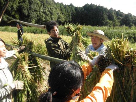 2010稲刈り6