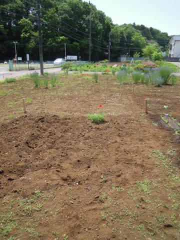 耕しBefore。手前と奥の2区画です。