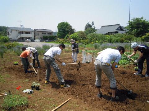 まずは先週から少し硬くなった土をほぐします。