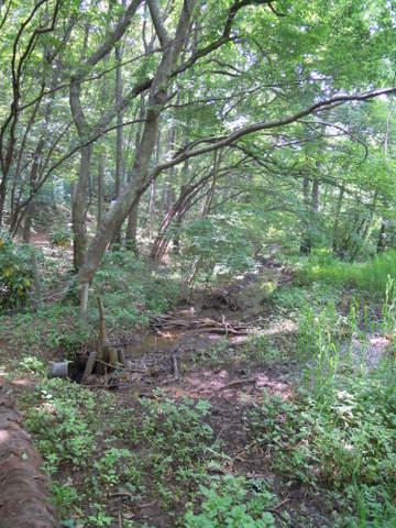 いい感じの湿地が広がります。