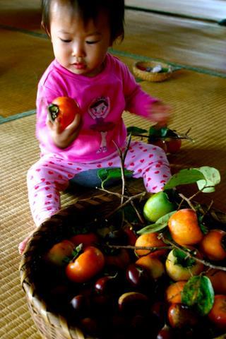 柿えらび1