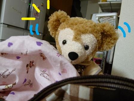 荷造りクマ