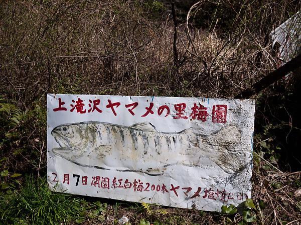 上滝沢ヤマメの里梅園 看板