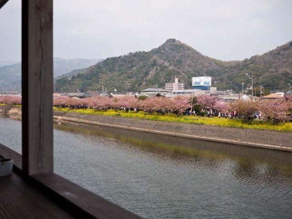 CAFE LOKANTA  テラス席からの河津桜