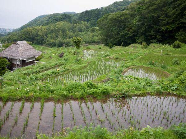 松崎町 石部の棚田 06