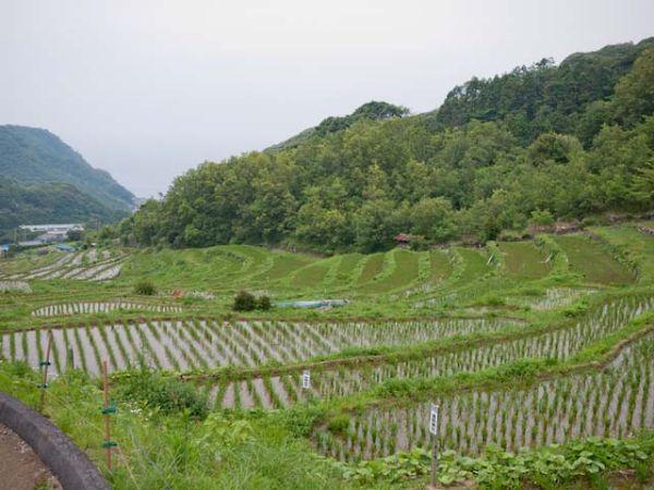 松崎町 石部の棚田 09