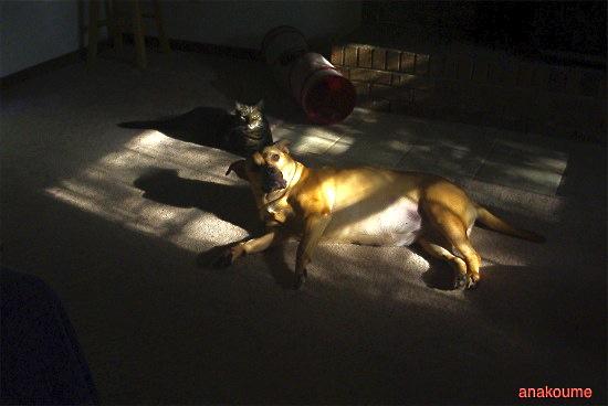 日差しの中でマッタリ1