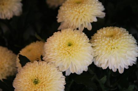 20110916f (21)