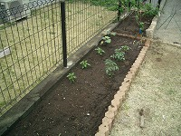 菜園0418 (1)