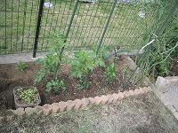 庭いじり (4)