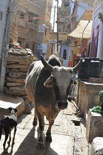 インド旅行2012ジャイサルメールへ (1)