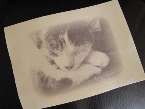 さん猫やしき 053