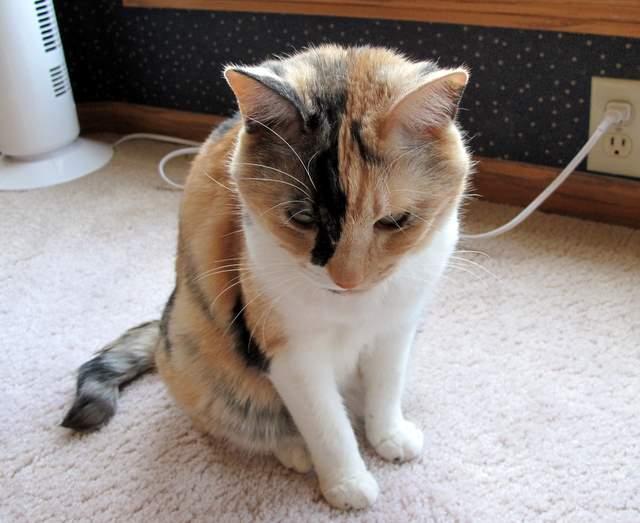さん猫やしき 052-1