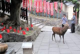 Japan 2010 270
